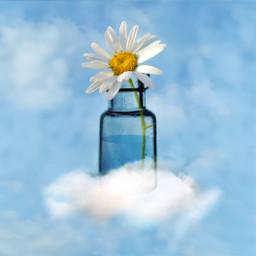 flower daisy emotions happy thinking sky bottle blue madewithpicsart picsart freetoedit ircminimagicbottle minimagicbottle