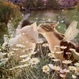 fairy fairykittens fairykitties fairycore cottagecore aestheticedit aesthetic freetoedit