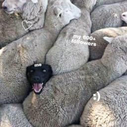 aesthetic dog sheep thankyou thanks