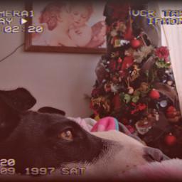 dog freetoedit srchappymoment happymoment