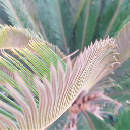 freetoedit plant lovinggreen green nature