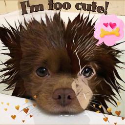 freetoedit usedreplaybypicsart puppy text callout heartsticker madewithpicsart