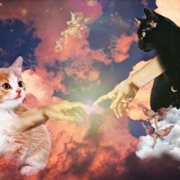 renaissance cat freetoedit ectherenaissance therenaissance