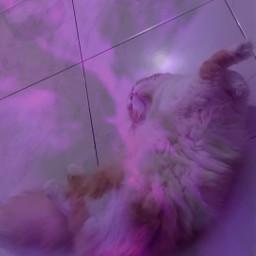 cat sleepycat lazycat usedmyownsticker freetoedit