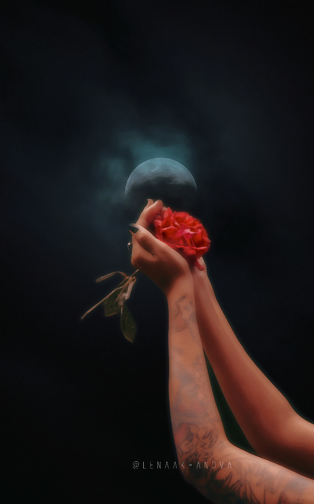 #freetoedit#rose  🌹 #moon  🌑 #love  ❤️
