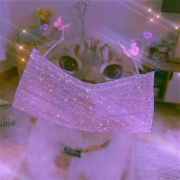 cute cat animals animal pet catlover mask pink wearamask corona coronavirus glitter sparkle sparkles shinee shine aesthetic aestheticedit aesthetics tumblr makeawesome madewithpicsart heypicsart picsart papicks @picsart freetoedit