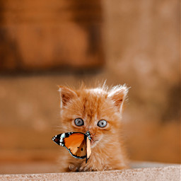 cute kitten butterfly interesting situation freetoedit