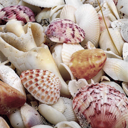 seashells pretty freetoedit