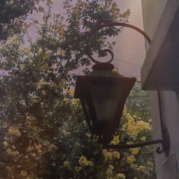 photograph vintageaesthetic vintagephotography vintagestyle vintageedit aesthetic aesthetictumblr aestheticsky tumblraesthetic tumblrphoto grunge grungestyle flowers sky sunset yellow aestheticyellow photography edit filters picsartedit freetoedit