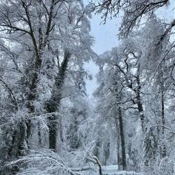 freetoedit snowwhite forestspirit switzerland