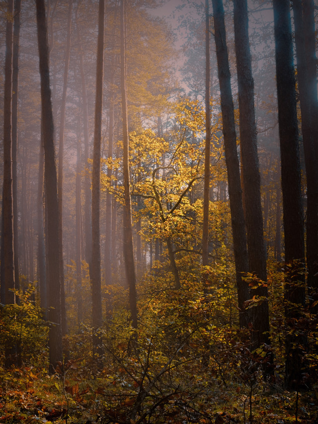 #forest #tree #fog #photography #nature