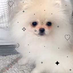 fluffy cute rebekahwing teambeki freetoedit