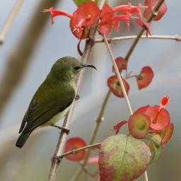 sunbirds birds