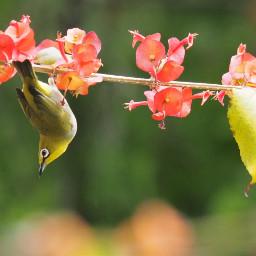 nature birdsphotography