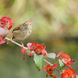 birdsphotography nature
