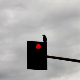 bird silhouette stoplight redcolor sky greysky rainingday mycity rome