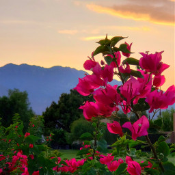 sunset goldenhour sky mountians flowers orangesky palmsprings desert serene travel destination california fushia orange myoriginalphoto photography freetoedit