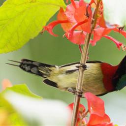 birdsphotography birdslover birdwatching