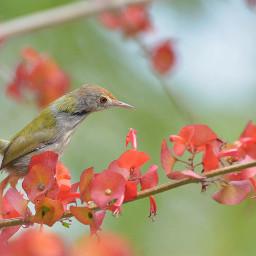 birdsphotography birds birdlove