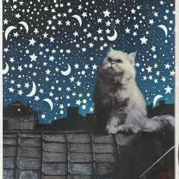 freetoedit cat cats stars moon srcstarsandmoons