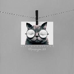 picsart myedit myremix surreal freetoedit minimal grey cat followme