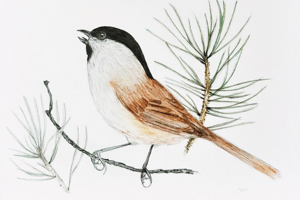 #coloredpencils #bird #drawing
