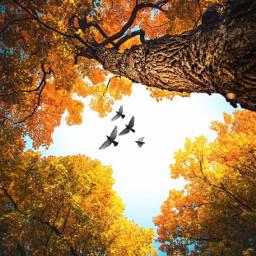 freetoedit naturethroughmyeyes