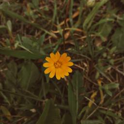 photography photostory photo picoftoday flower nature naturephotography freetoedit