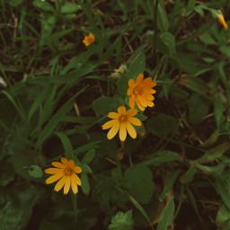photography flower flowers photostory photooftheday picoftoday naturephotography nature