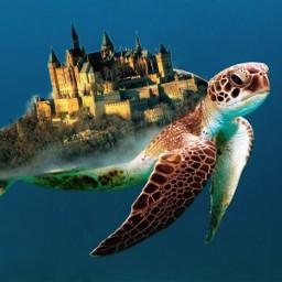 unsplash turtle city birds castle savetheturtles freetoedit