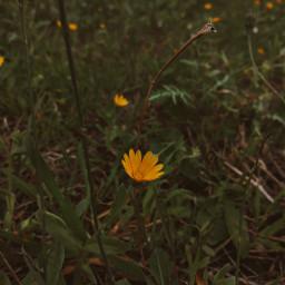 photography photostory photo picoftoday naturephotography nature flowers freetoedit