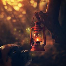 mydog❤ onelove❤ magic mydog onelove