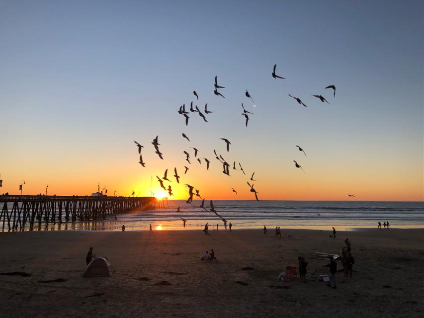 #nature #beach #pismobeach #sunset #birds