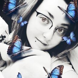 butterfly bluebutterfly i freetoedit srcbluebutterflies bluebutterflies