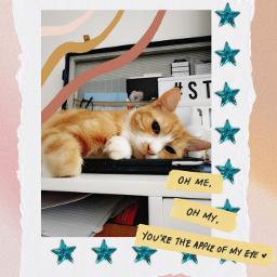 cat edit collage kitty freetoedit