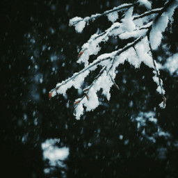 myphotography nature snow winter tree background photography freetoedit