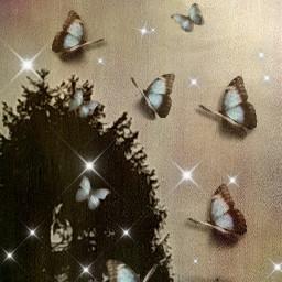 butterfly freetoedit srcbluebutterflies bluebutterflies