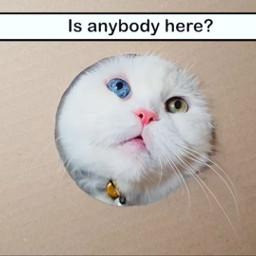 catsphotography