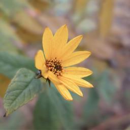 freetoedit meadow flower nature
