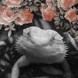 flowers lizard beardeddragon freetoedit