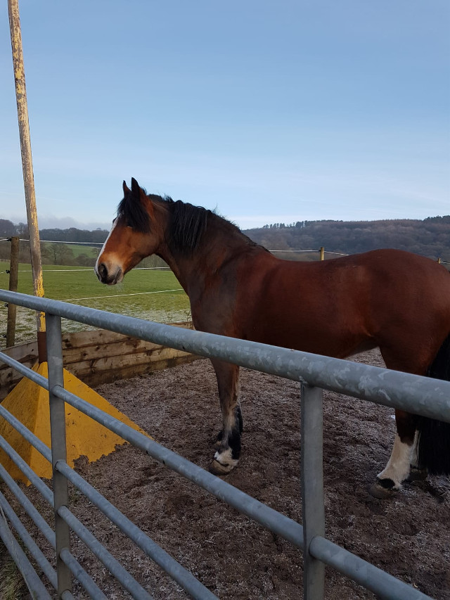 #horses #equestrian
