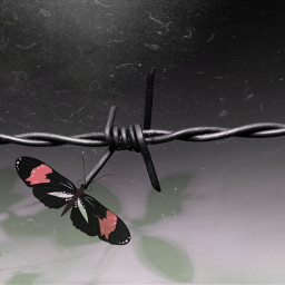 darkness blackandwhite butterfly freetoedit butterfly