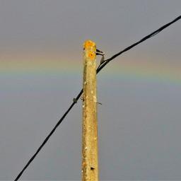 rainbow panasoniclumix sky beautifulsky