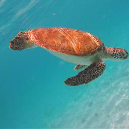 curacao challange vacation snorkeling swimming sea pcmybestphoto mybestphoto