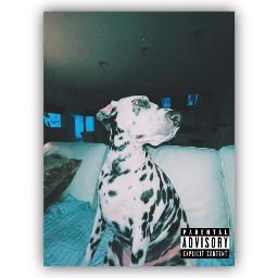 albumcover album dalmatian tiktok tiktoktrend freetoedit
