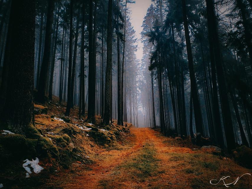 #forestphotography #dark #fog #winter #naturephotography #intheforest #nature #nature_lovers #nature_perfection #awalkinthewoods #trees #tree_captures #tree_magic #foggy #foggyday