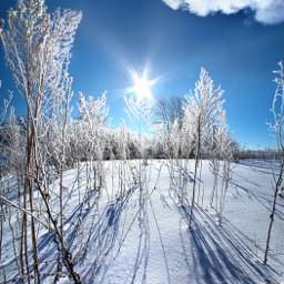 freetoedit remixit nature landscapephotography beauty pretty landscape beautiful follow fanart peace followme followforfollow winter frost frozen freezing blue
