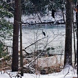 freetoedit nature blueheron frozencreek snowyforest