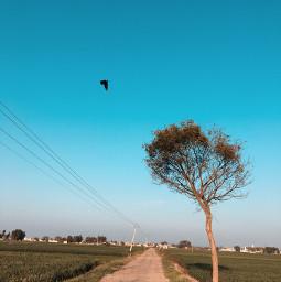freetoedit photography iphonephotography nature nopeople travel sky alonelytree daylightshot