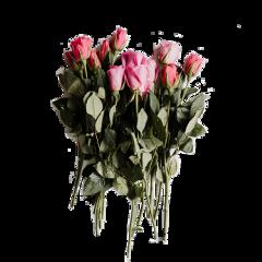 flowers roses beautiful freetoedit